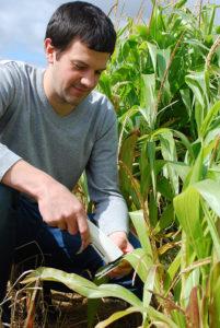 Andreas Carstensen måler fosforstatus i afgrødeplanter for at udvikle sensormetoden.