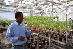 I drivhus og klimakamre laves forsøg med bade tempererede og tropiske afgrøder
